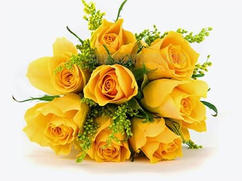 Ý nghĩa hoa hồng vàng trong ngày 20/11